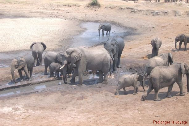 66-elephants-hwange