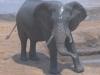 67-elephant-hwange