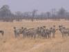 69-zebres-hwange