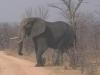 72-elephant-hwange