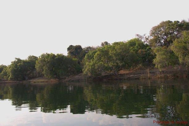 24-zambeze-zambie