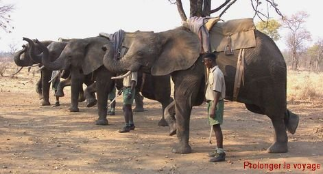 29-elephants-parade