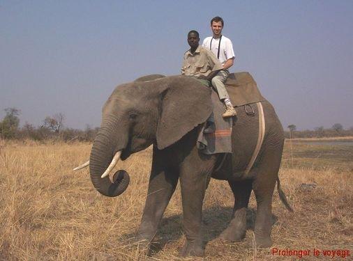 32-moi-elephant