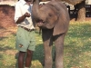 28-elephanteau