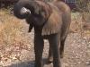 35-elephanteau-biberon